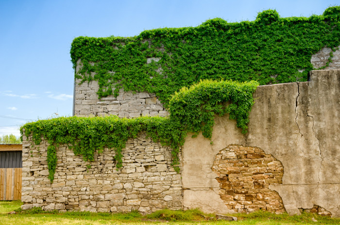 2. This old limestone building in Afton, off Route 66, is being reclaimed by nature.