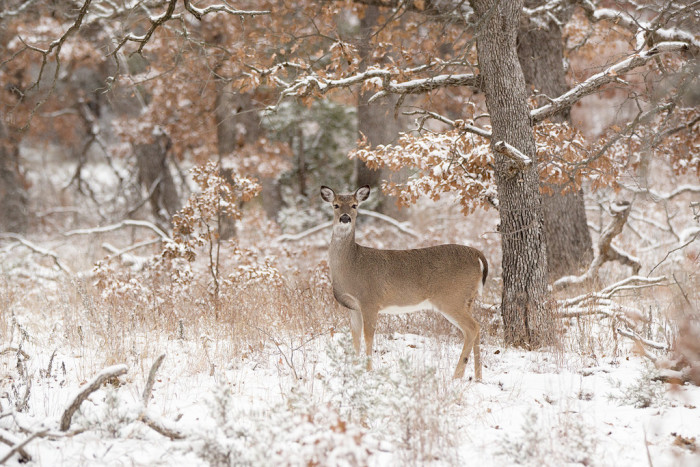 9. Deer in the wild are a sight to behold.