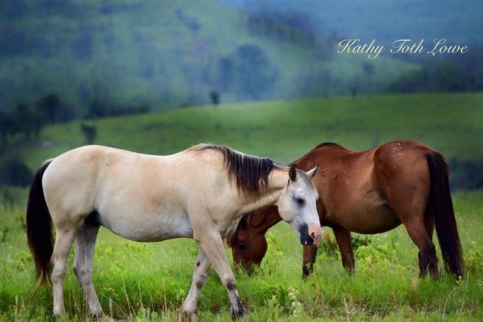 13. Horses grazing the green pasture on a foggy morning.