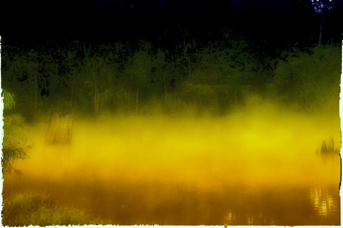 12. What do you think is in this swamp?