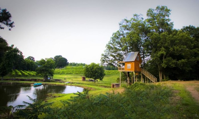 3. Treehouse Vineyards
