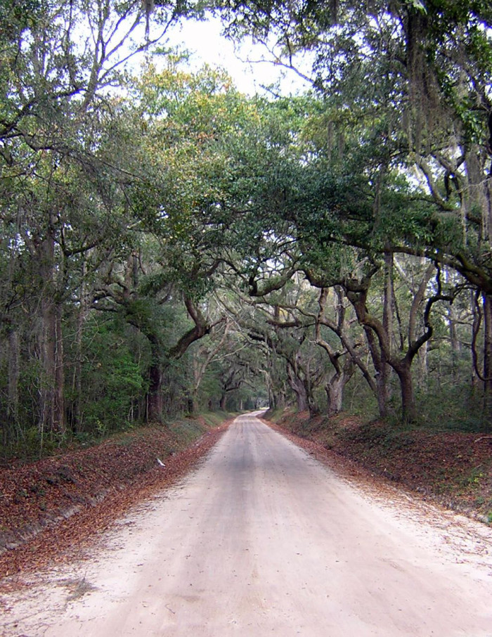 road-to-steamboat-landing-on-edisto-island