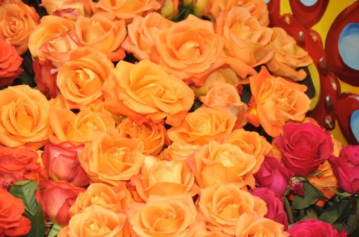 5. Go to the Texas Rose Festival in Tyler