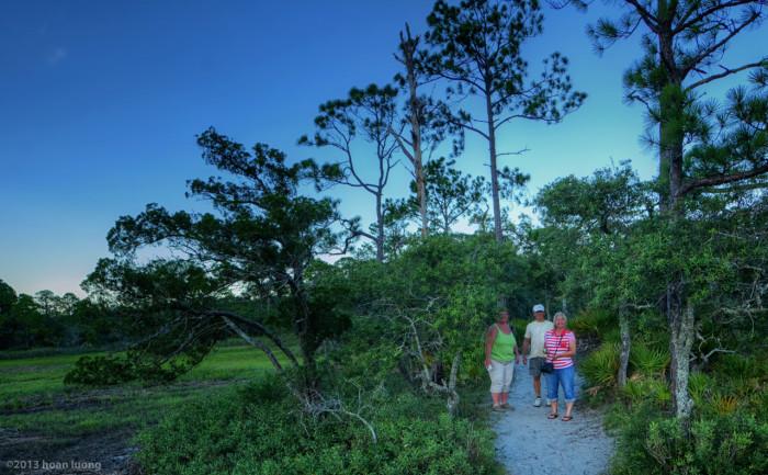 salt-marsh-trail-hunting-island-state-park-huan-luong
