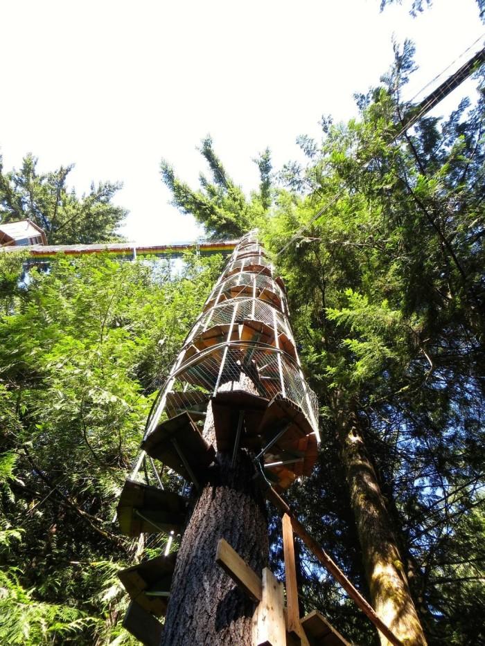Cedar Creek Treehouse In Washington