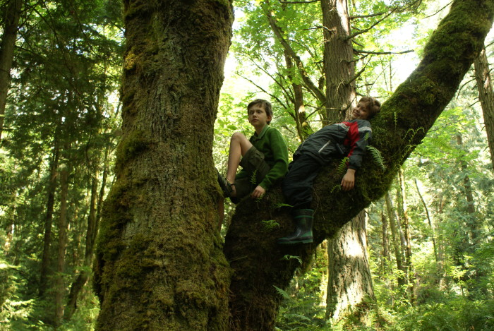 1. Tree climbing was ten times more fun growing up in the Evergreen state.