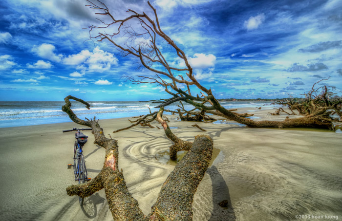 v-shaped-branches-hunting-island-huan-luong