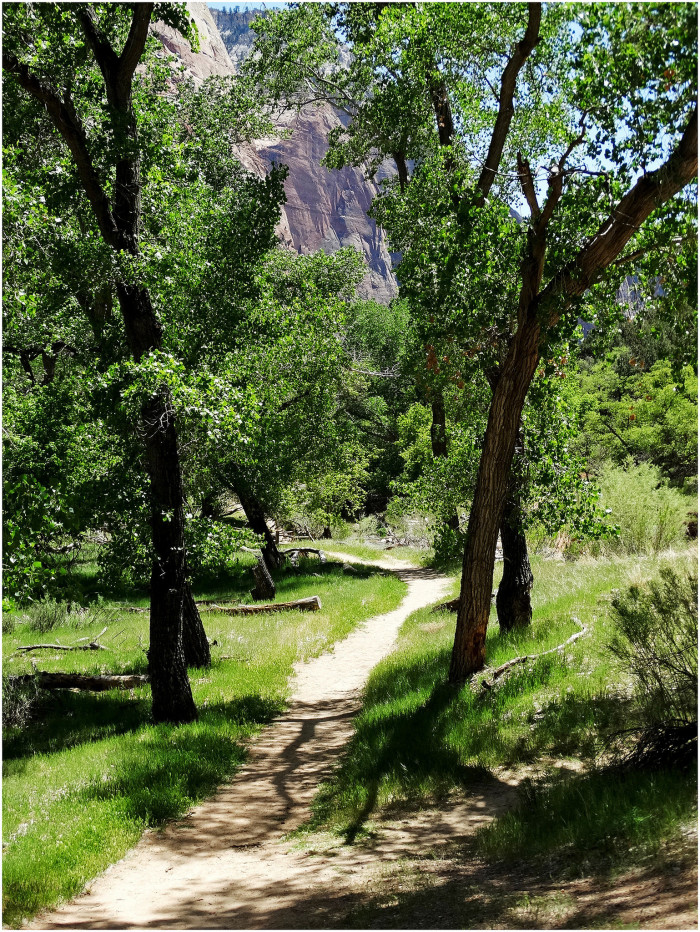 6. A wandering path through the red rock and green trees...