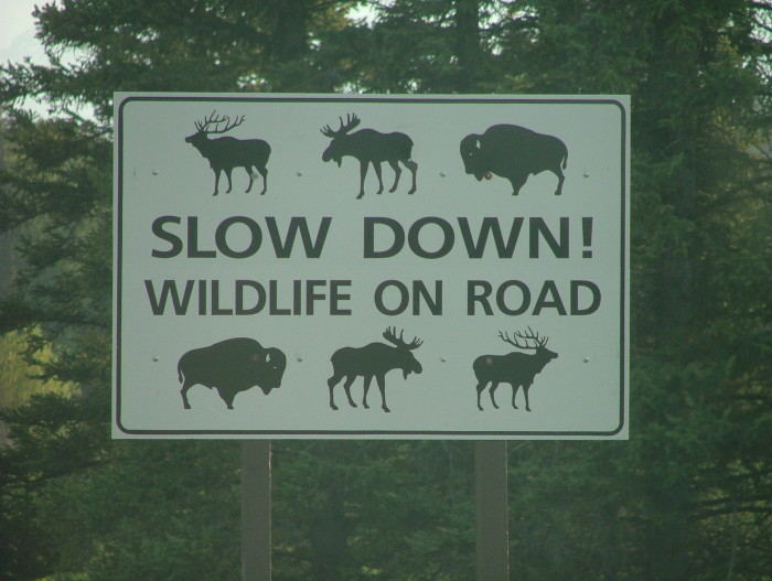 "6. We can actually use the excuse ""there was an elk in the road"" to explain why we are late."