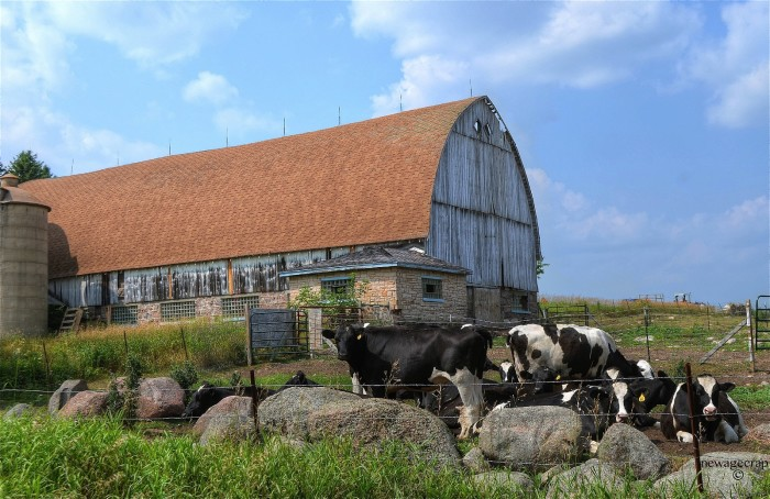 8. There are over 10,000 dairy farms in Wisconsin.