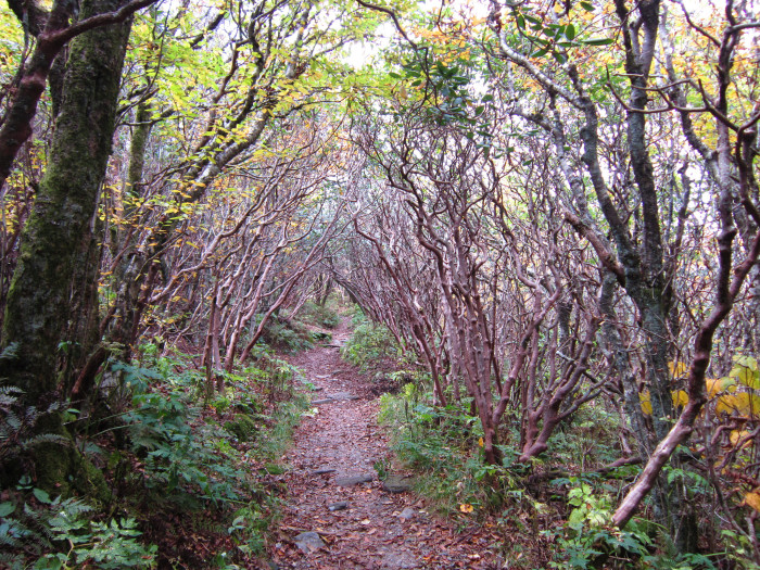 9. Hike Craggy Gardens Trail...it's like something from a fairytale!