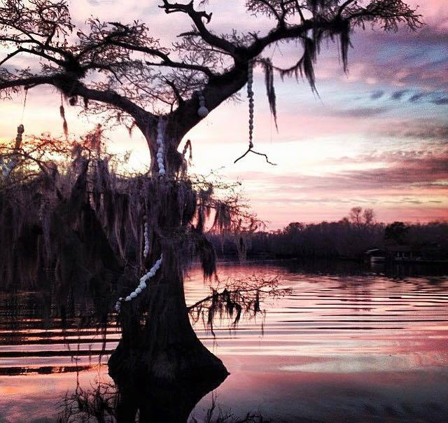 12. This spooky cypress tree would fit right into a fantasy film.