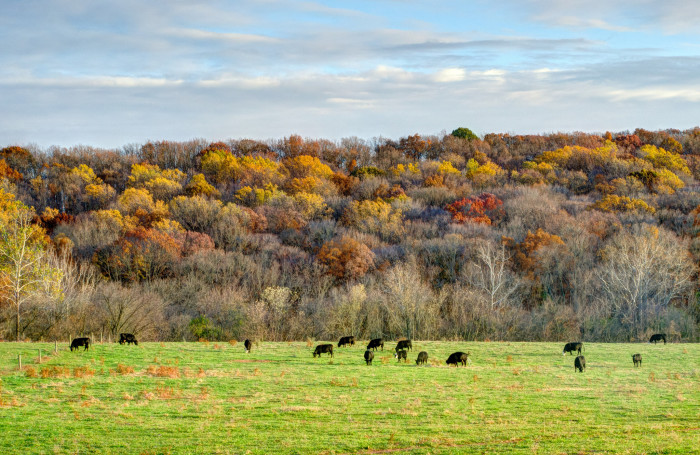 20. Love this pastoral scene on a quiet Frederick farm.