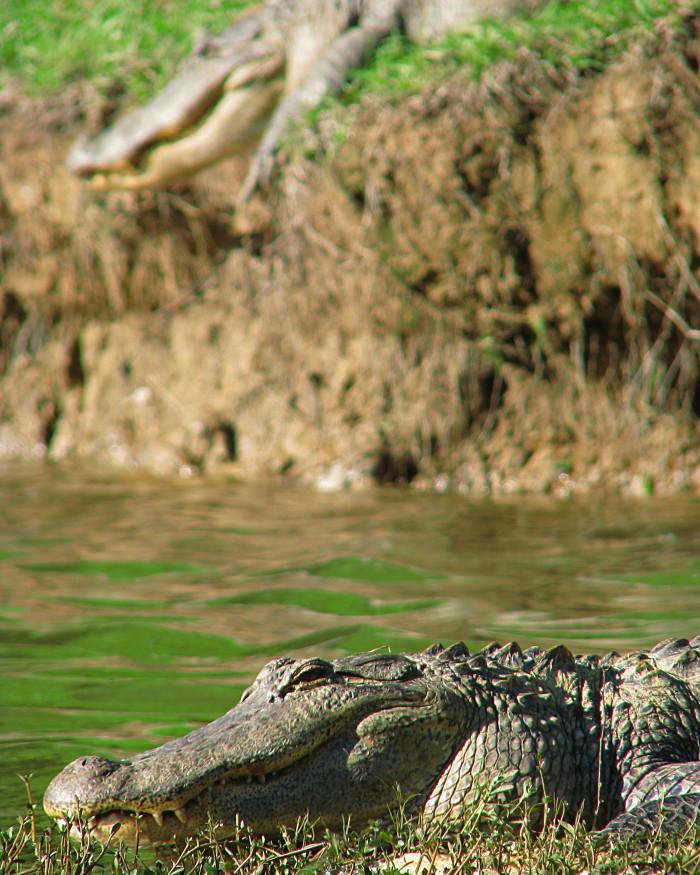 11. Sam D. Hamilton Noxubee National Wildlife Refuge, Noxubee, Oktibbeha, and Winston Counties