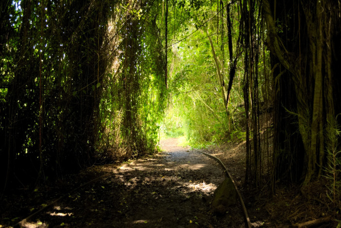 11. Oahu's Kanealole Trail will make you feel as though you're miles away from civilization, even though you've not left Honolulu.