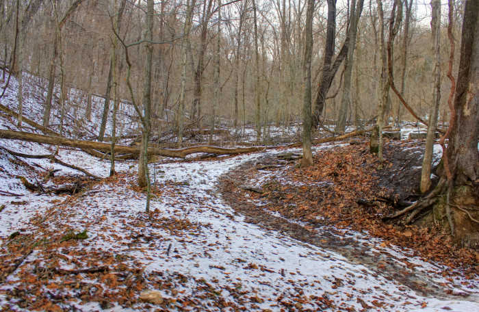 11.Forest in the winter at Weldon Springs Natural Area.