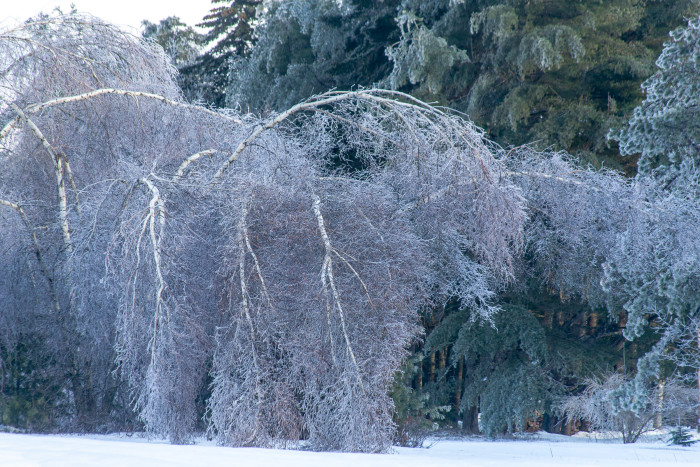 """13. """"In a world were a mild December brought the wrath of angry ice onto Southern Maine..."""""""