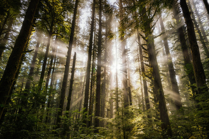 10. Sunlight streams through the forest: