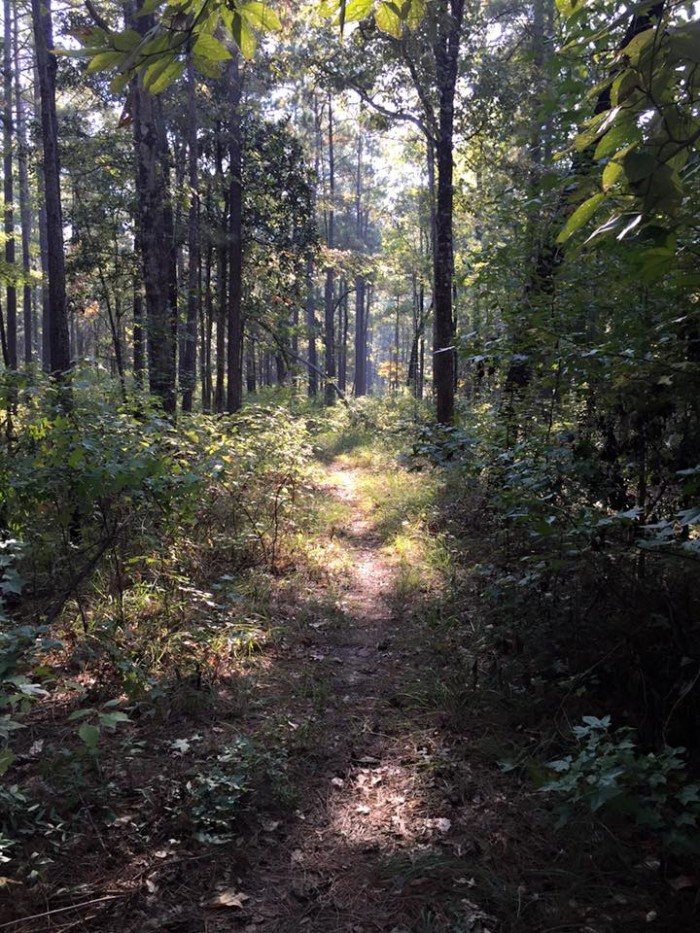 The 26.2 mile trail includes pine covered hills and dense hardwood forests.