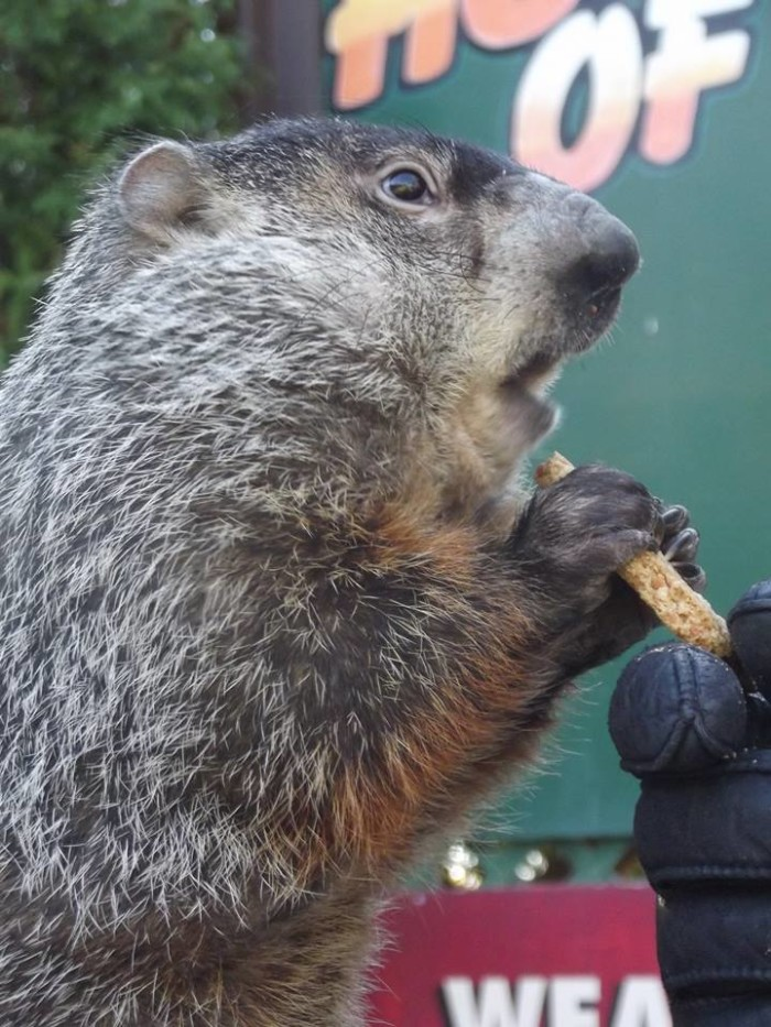 "4. Nevertheless, the groundhog's full and official name is ""Punxsutawney Phil, Seer of Seers, Sage of Sages, Prognosticator of Prognosticators, and Weather Prophet Extraordinary.''"