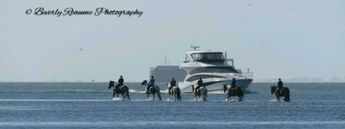 24. Horses walking on water at the Skyway Bridge Rest Area.