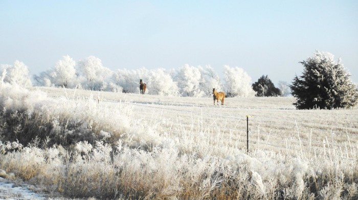 These horses in a frosty field are just beyond beautiful.