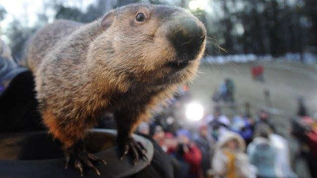 "1. Groundhog Day began as a Pennsylvania Dutch holiday derived from the German ""Candlemas,"" a celebration of the point midway between winter solstice and spring equinox. If the sun came out, there would be six more weeks of winter."