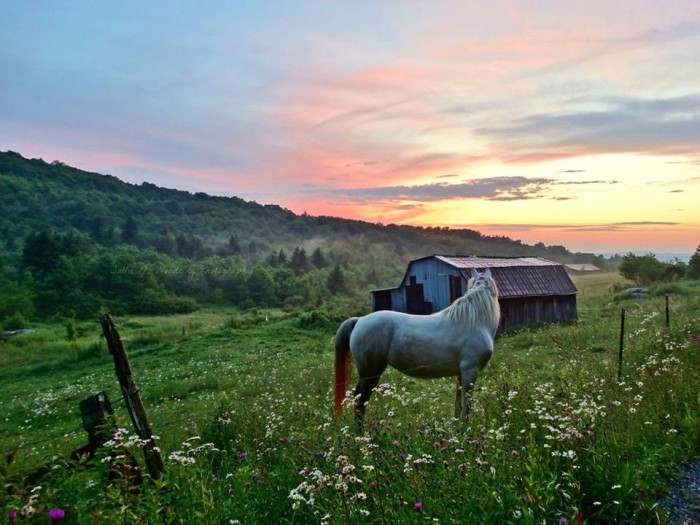 14. Hope the horse and a gorgeous Banner Elk sunset by Sallie Woodring