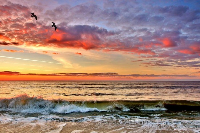 2. Two birds and a colorful sunrise over Holden Beach by Terrah Hewett.