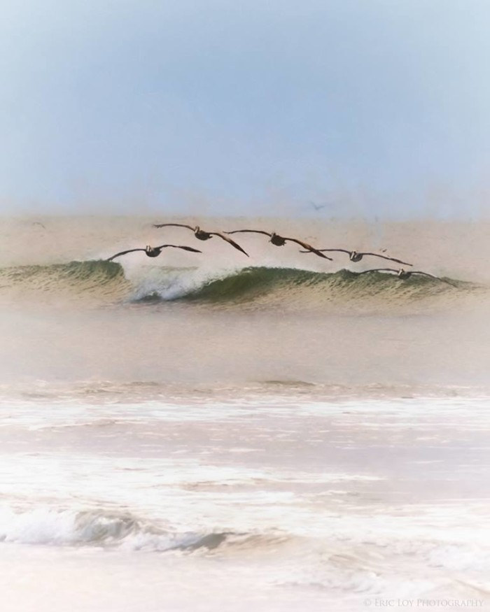 3. Pelicans riding a wave by Eric Loy.