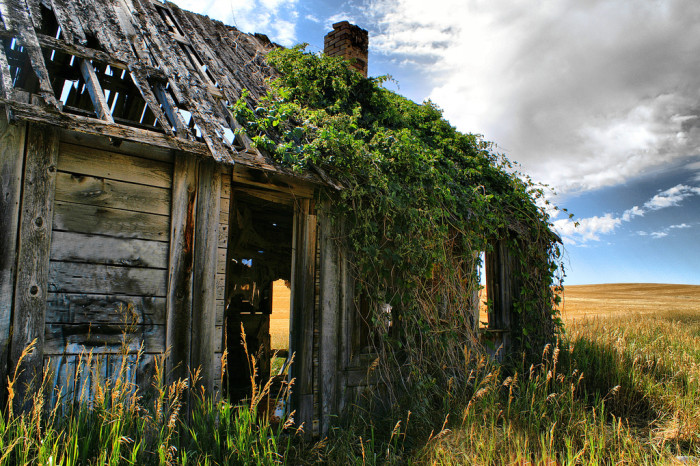 4. This rustic building in Southeast Idaho makes the perfect trellis for the plain's native growth.