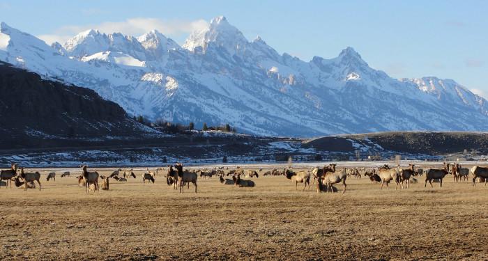 10. National Elk Refuge