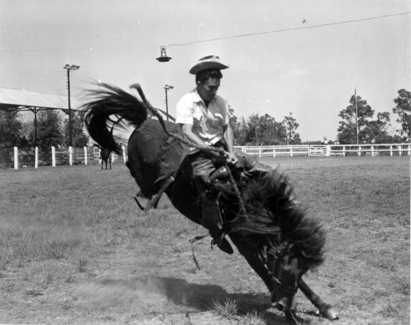 """13. Wild horse and cowboy at Tupperware """"Jubilee"""" - Orange County, 1955"""