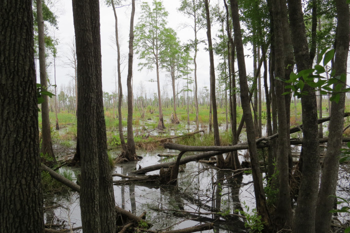 There is a stillness about the swamp that engulfs you.