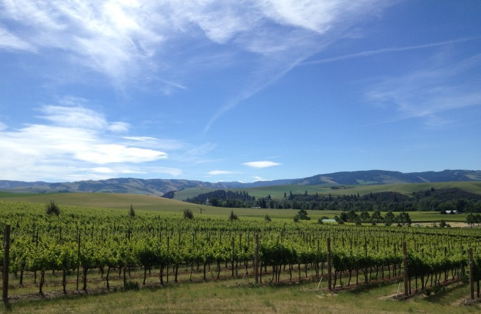 8. You've had a taste of Washington's wine country.