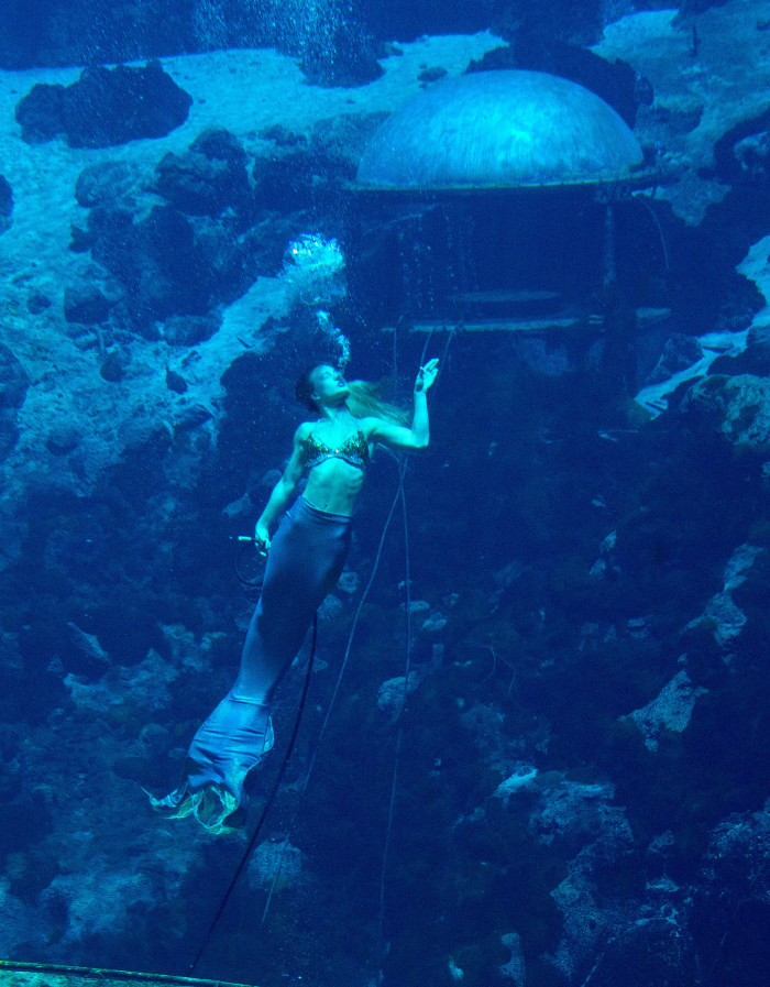 Weeki Wachee Springs State Park,  6131 Commercial Way, Spring Hill, FL 34606