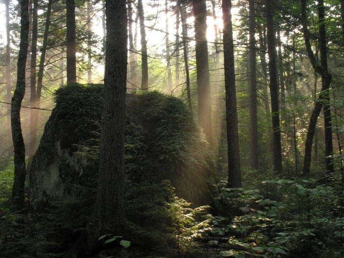 """11. """"In a world where humans no longer exist and moss is the only thing hiking the Appalachian Trail..."""""""
