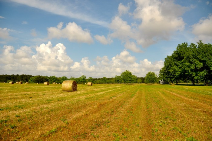 2. A picturesque hay field in rural Alabama.