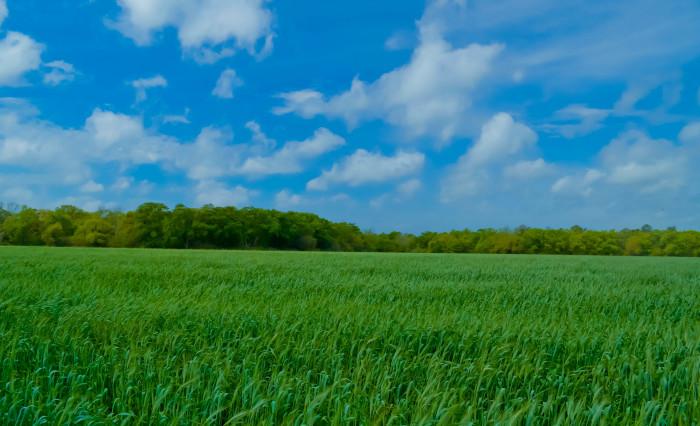 12. Picture-perfect farmland in rural Alabama.