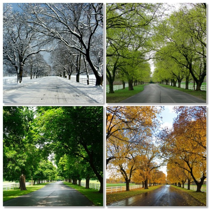 3. All four seasons are experienced in Alabama.