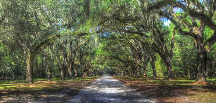 4. The beautiful archway of Spanish moss in Wormsloe Plantation: