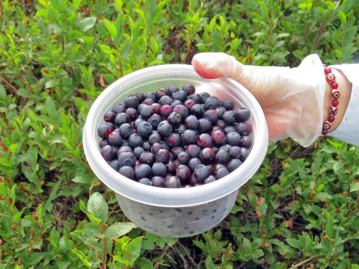 10. Huckleberries