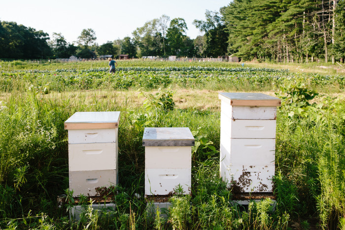 1. Your honey is bee-to-bottle fresh. Nothing sweeter than that. (Saltbox Farm, Concord)