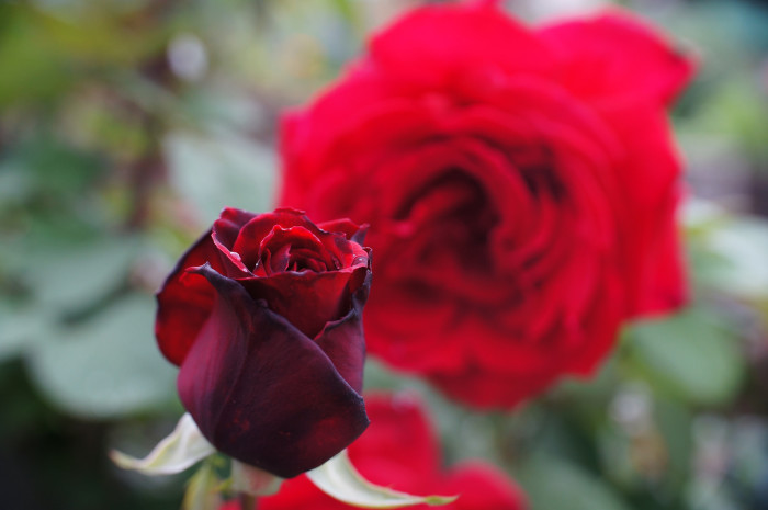 7. Investigators eventually learned that Little had received roses from a secret admirer not long before she vanished.