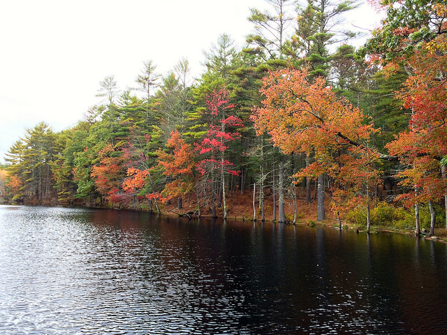 13. If fall is your favorite season, you will miss watching the leaves change in Rhode Island.