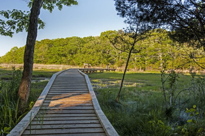 3. These wooden boardwalks seem to be everywhere and it's amazing. (Cornell Farm, South Dartmouth)