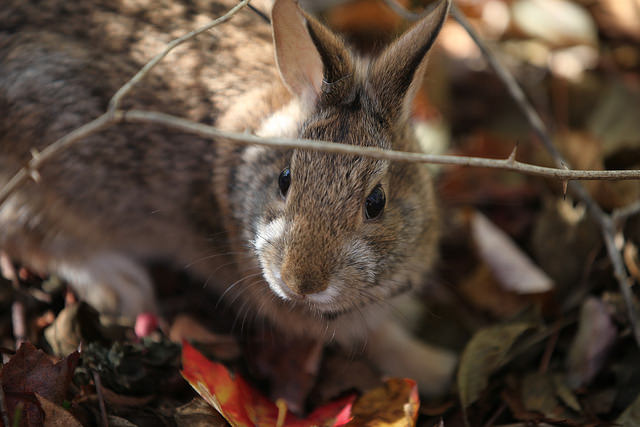 12. New england cottontails are all over the state and are always an exciting and adorable site.