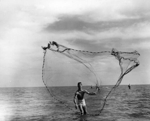 4. Casting a net in the Gulf of Mexico - Apalachicola Region, circa 1950
