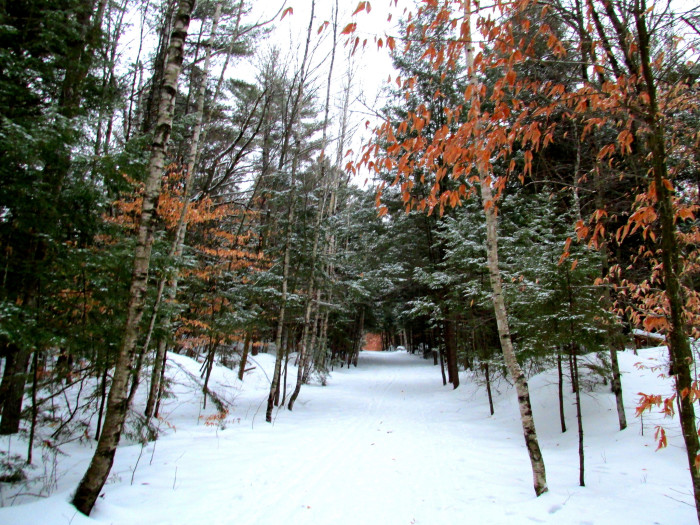 15. Winter snow meets autumn leaves.