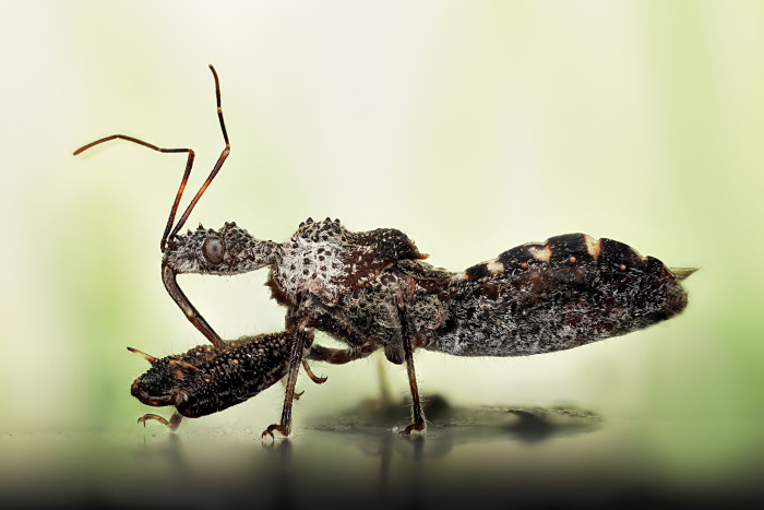 1. The Not-So-Romantic Kissing Bug